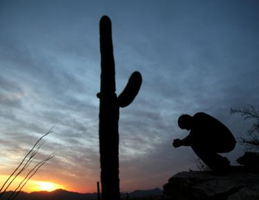 Desertprayerweb